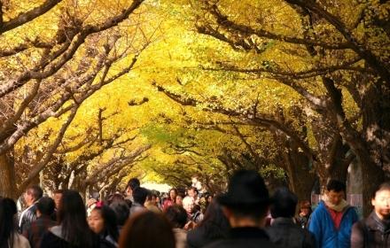 いちょう祭り2009 (8)
