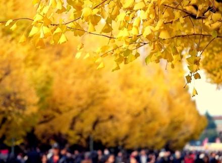 いちょう祭り2009 (17)