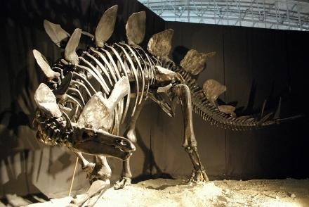 恐竜展 (3)