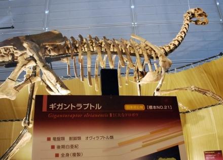 恐竜展 (5)