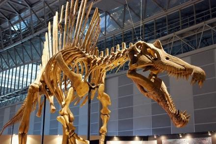 恐竜展 (17)