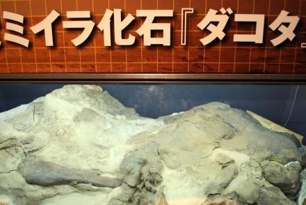 恐竜展 (25)