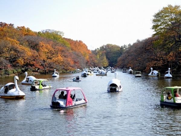 井の頭公園 (35).jpg