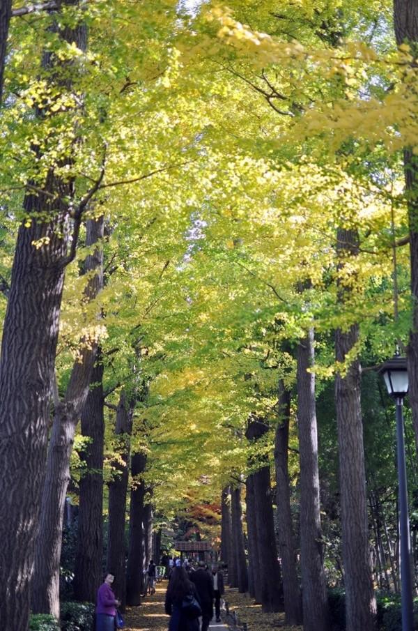大田黒公園 (2).jpg