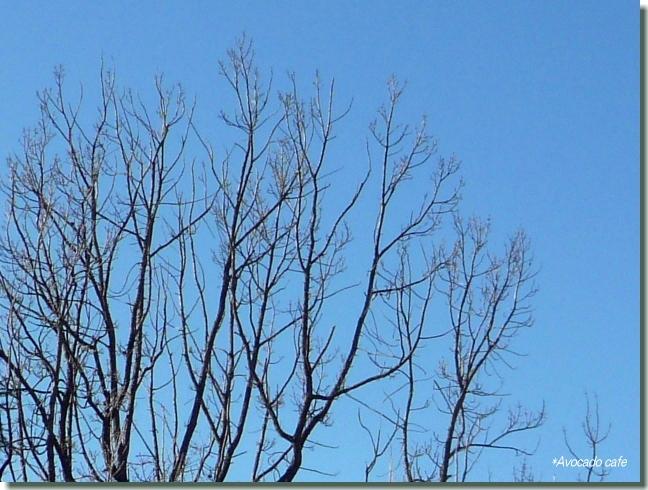 クヌギの枝