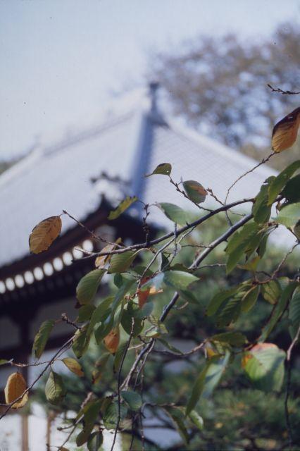里の秋2011-01a
