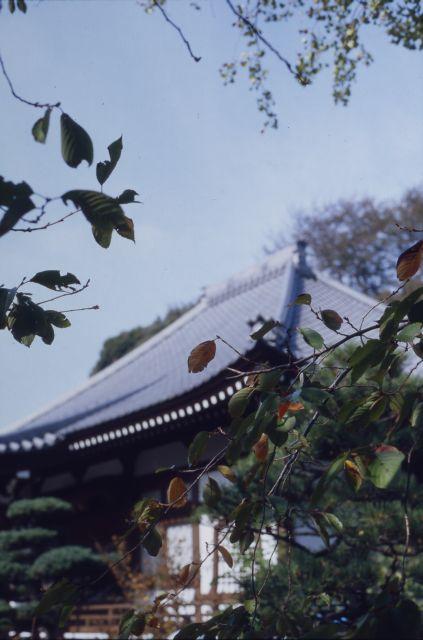 里の秋2011-01b