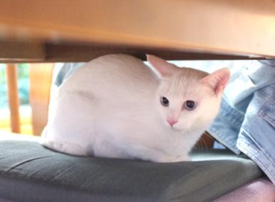 明美ちゃんテーブルの下に!