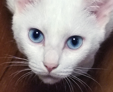 ブルーアイが綺麗な明美ちゃん