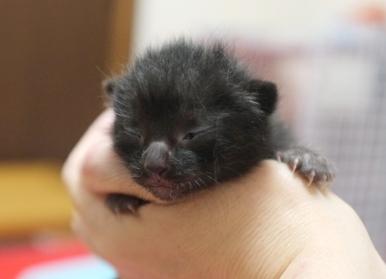 黒猫のアプリちゃん