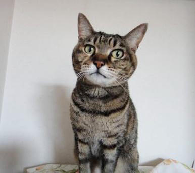 先住猫のチョコちゃん