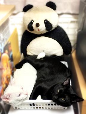 黒ニャンと白ニャンとパンダと