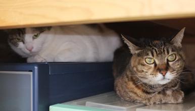 先住猫のチョコちゃんも仲良く押入れに