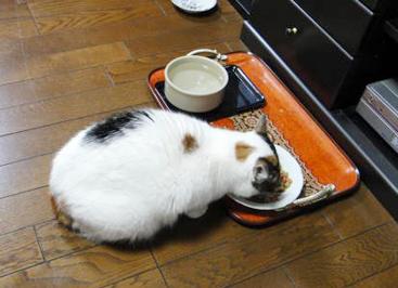 ご飯もしっかり食べます