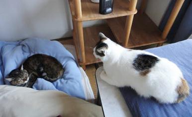 先住猫のチョコちゃんと一緒のルミネちゃん