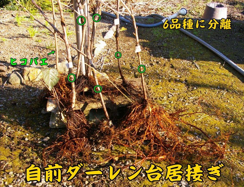 1dar_bunri1202c1.jpg