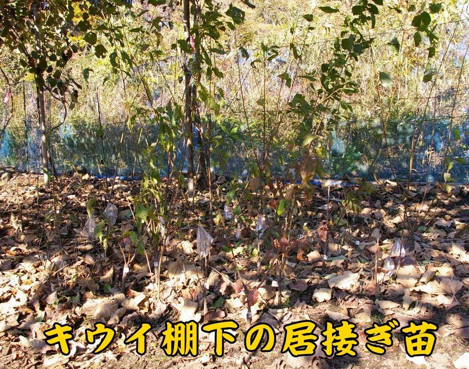 1momo_su1203c1.jpg