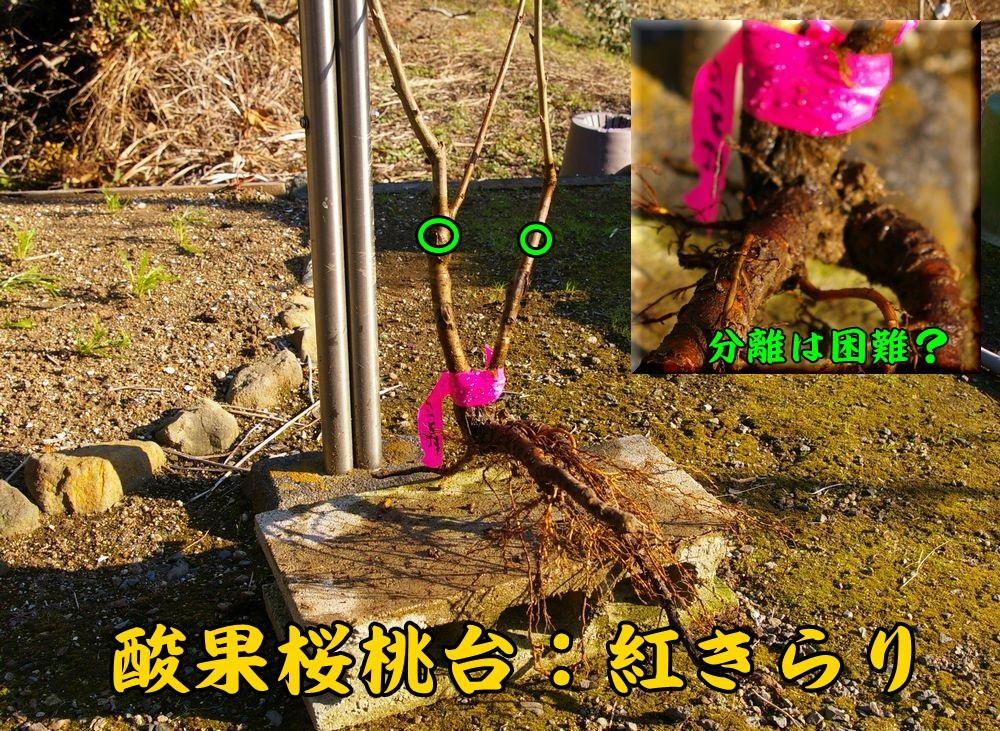 1san_kir1202c1.jpg