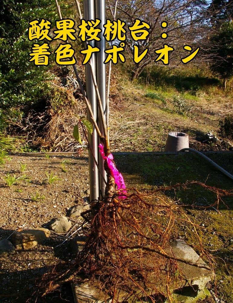 1san_nap1202c1.jpg