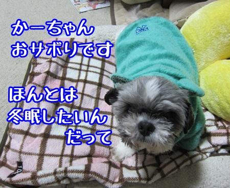 1130-01_201311302041414fe.jpg