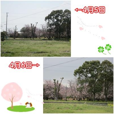 0406-桜