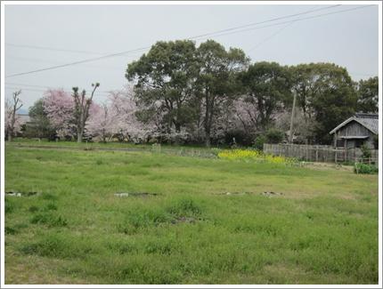 0413-桜