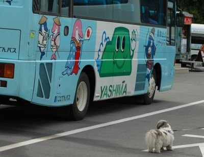 バスが気になる