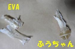 0309-c.JPG