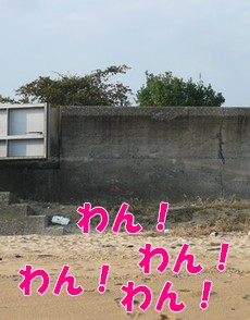 1111-a1.jpg