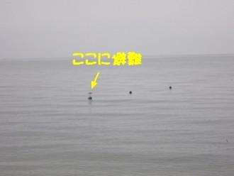 あおさぎ2.JPG