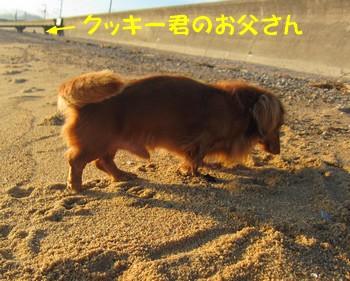 0910-クッキー2.jpg