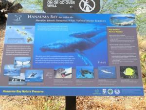 ハナウマ湾説明