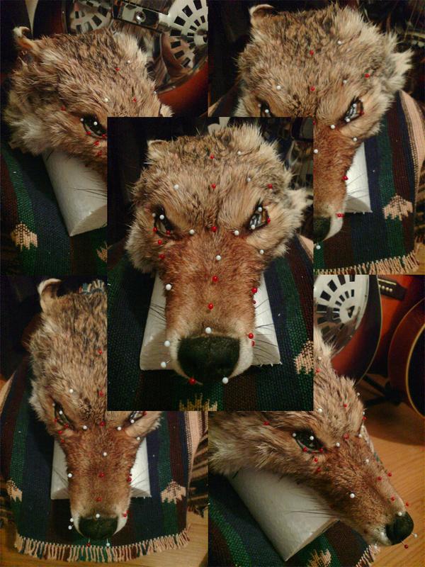 Koyote_3