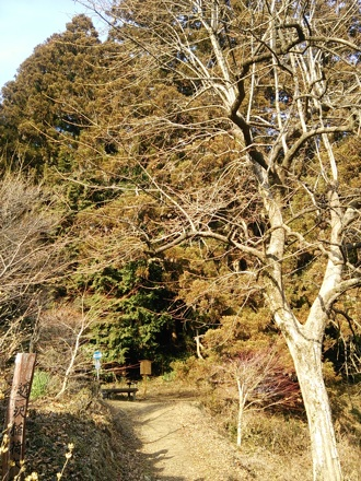 20140201_oosugi3.jpg
