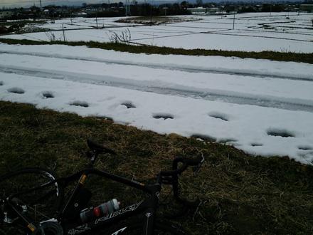 20140211_arasai1.jpg