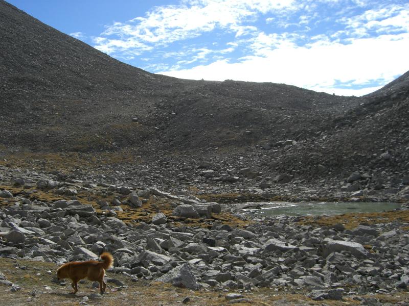 西チベット34