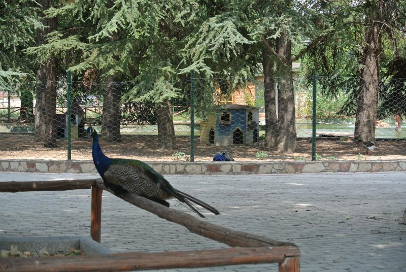 スコピエ動物園3