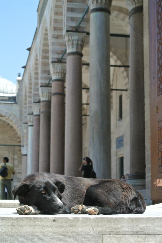 イスタンブール犬