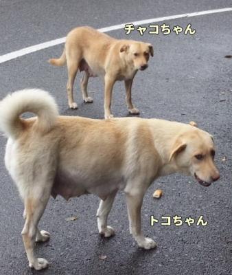 imagetc.jpg
