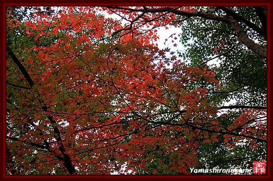 RY-20111115-浄瑠璃寺 (17)