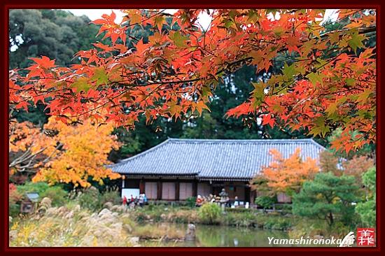RY-20111115-浄瑠璃寺 (7)