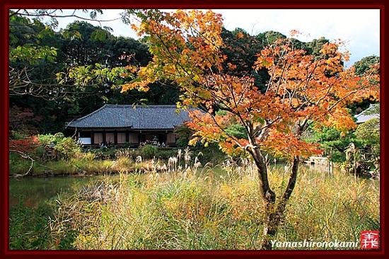 RY-20111115-浄瑠璃寺 (10)