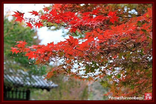 RY-20111115-浄瑠璃寺 (20)