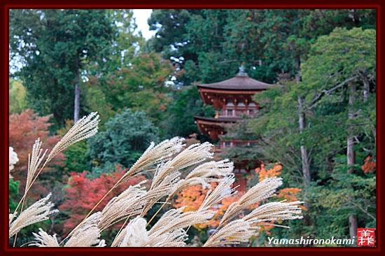 RY-20111115-浄瑠璃寺 (39)