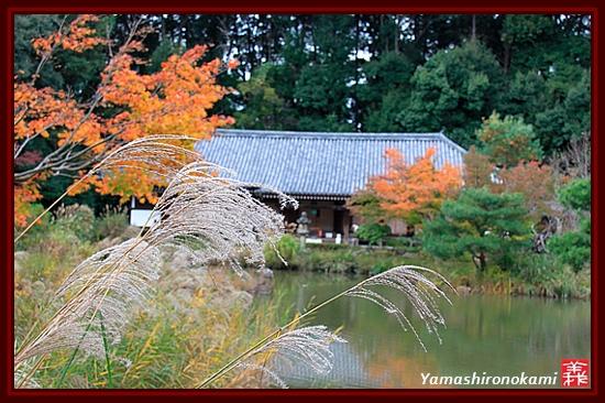 RY-20111115-浄瑠璃寺 (22)