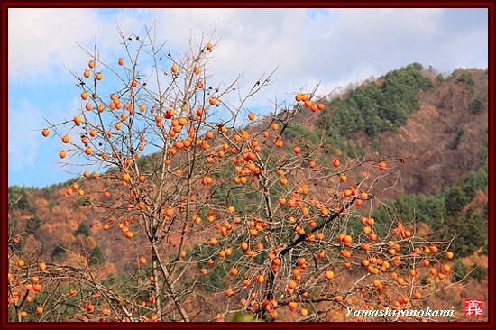 RY-2011-11-20-高遠城 (121)