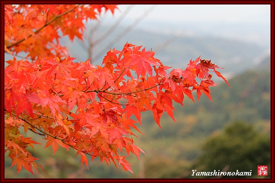 RY-2011-11-23-海住山寺 (38)