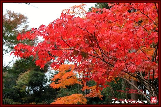 RY-2011-11-23-海住山寺 (67)