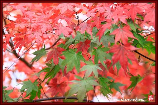 RY-2011-11-20-高遠城 (128)