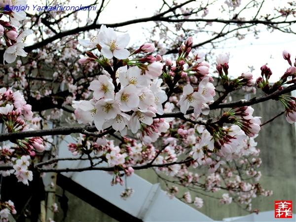 2012_04_06_img33.jpg